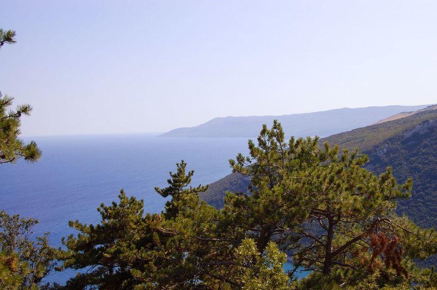Coastline near Plomin, Istria Croatia Capturing Freedom Travel Photography Nature Sea View Beautiful Nature Beautiful Day Coastline Hazy Skies Panoramic View Landscape Blue Sea Conifers