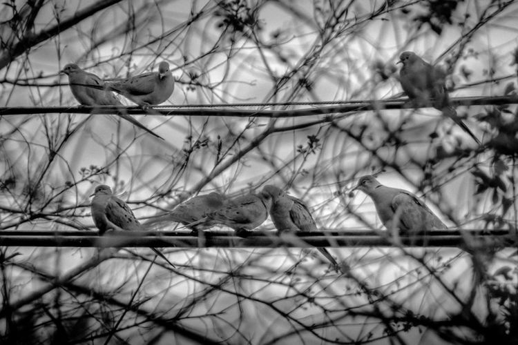Assembly of The Small Council. Birds Nature Blackandwhite EyeEm Best Shots