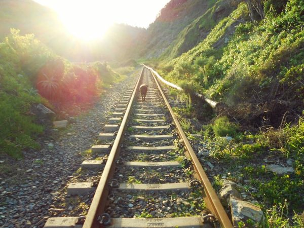 Follow me. South Africa Wilderness Railroad Track Dog Rail Transportation The Way Forward Journey Future Transportation Railway Track Tranquil Scene Tranquility Green Sunset Connection Track Railroad Track