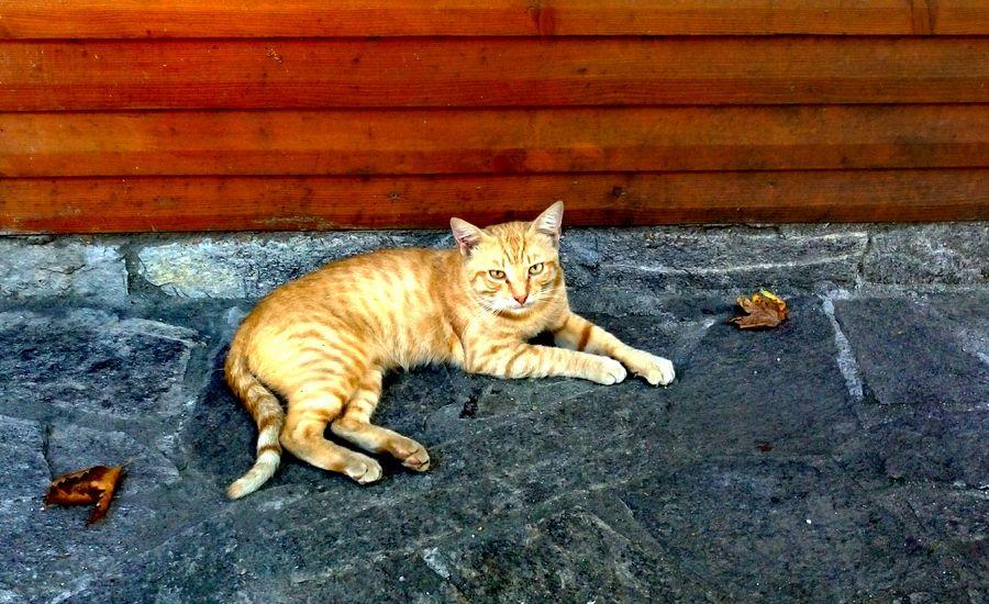 kedi kedi aşkı kediseverler kedidelileri kedicik 🐈 kedilobisi Cirkinim Cat Cat Lovers Cat♡