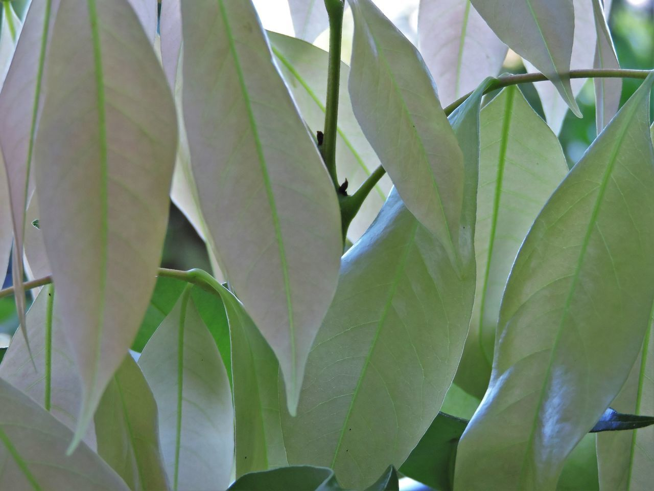 leaf, growth, plant, green color, nature, beauty in nature, no people, day, close-up, outdoors, freshness
