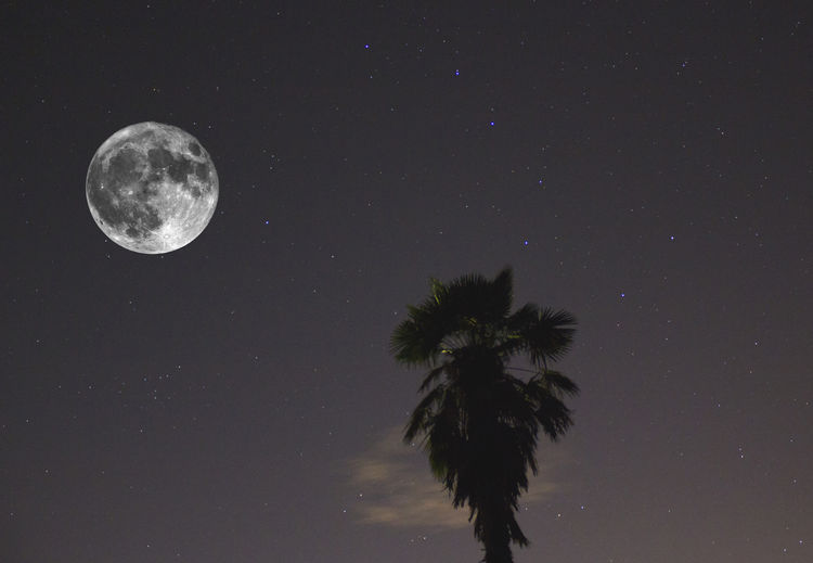 Halloween composition scene with big moon (taken by telescope) a isolated tree and stars as background. EyeEm Best Shots EyeEm Nature Lover EyeEm Selects EyeEmNewHere Halloween Ursa Major Astronomy Beauty In Nature Full Moon Low Angle View Moon Moonlight Nature Night No People Outdoors Palm Tree Planetary Moon Scenics - Nature Sky Space Star Star - Space Tree Tropical Climate