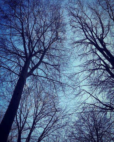 Tree Bare Tree Plant Branch Low Angle View Sky Tranquility