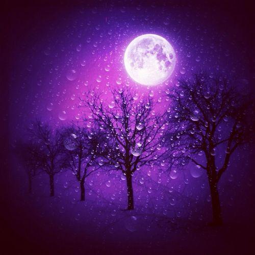 Rain Sky Trees Moon Night Lights Purple
