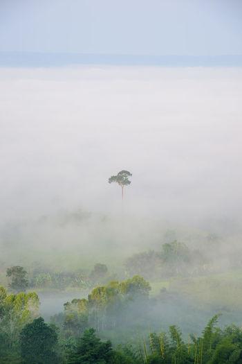 Sea mist on