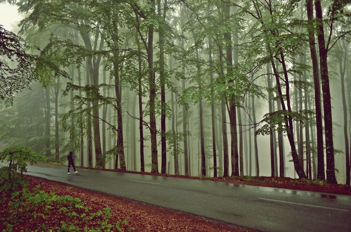 #foggy #landscape #natural Light #Nature  #nikon #photographer #Road Day Green Color Nature Outdoors Tree The Great Outdoors - 2017 EyeEm Awards