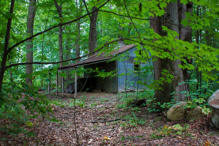 Shack in the woods Abandoned House Architecture Beauty In Nature Building Exterior Built Structure Forest Forest Photography Green Color Nature No People Shack Tin Roof Tin Roof Rusted Tree