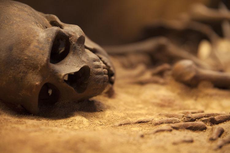 Close-up No People Skull Skull Face Skulls And Bones