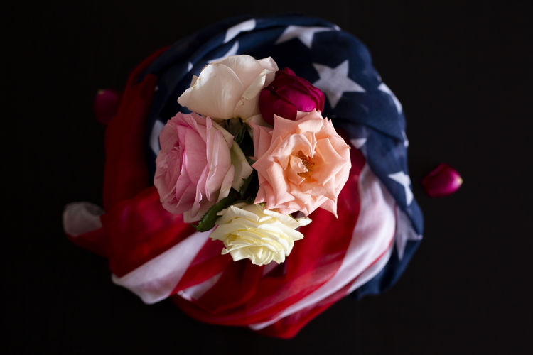Close-up of roses against black background
