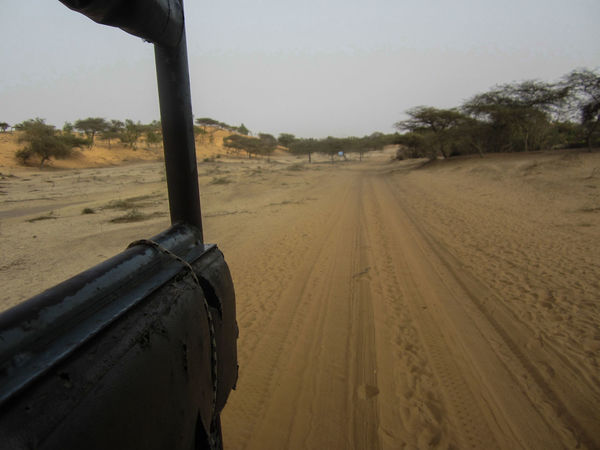 Africa Africa Collection Beach Beauty In Nature Day Desert Desert Road Desert Sand Land Vehicle Landscape Nature No People Outdoors Sand Senegal Sky Tire Track Tree