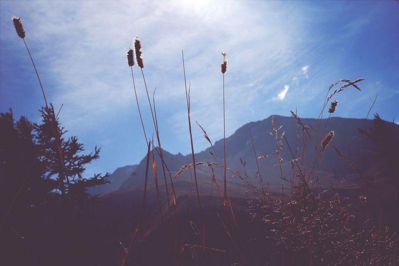 Corn Ear Of Corn Mountain Macro