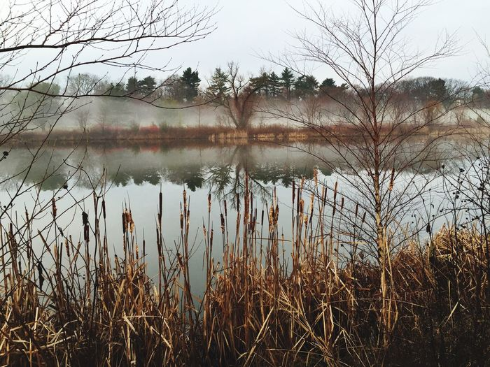 Reflect. Mist on pond. Morning walk. iPhone.