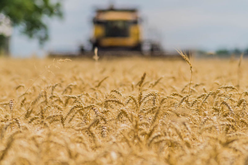 Agricultural Machinery Agriculture Barley Cereal Plant Combine Harvester Crop  Environment Farm Field Growth Harvesting Land Landscape Machinery Nature No People Outdoors Plant Ripe Rural Scene Selective Focus Sky Wheat