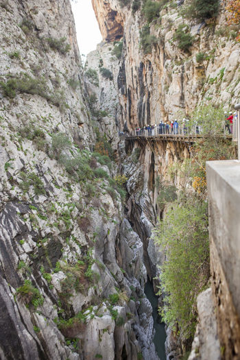 Visitors walking along the footbridge of Caminito del Rey path, Malaga, Spain Architecture Beauty In Nature Building Exterior Built Structure Day Ivy Low Angle View Mountain Nature No People Outdoors Plant Sky Tree