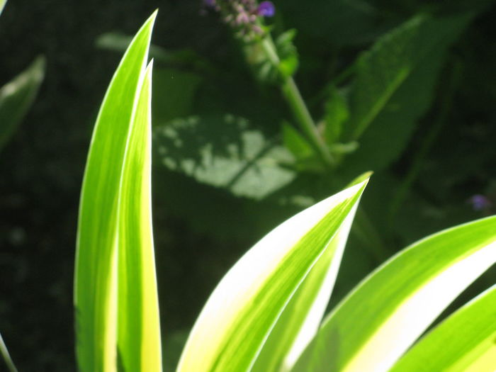 Green Color Growth Plant Leaf Plant Part Nature Close-up No People Day Beauty In Nature Focus On Foreground Outdoors
