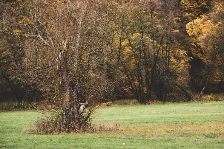 trees on field in forest Beauty In Nature Day Environment Field Forest Grass Green Color Growth Land Landscape Nature No People Non-urban Scene Oktober Outdoors Plant Remote Scenics - Nature Tranquil Scene Tranquility Tree