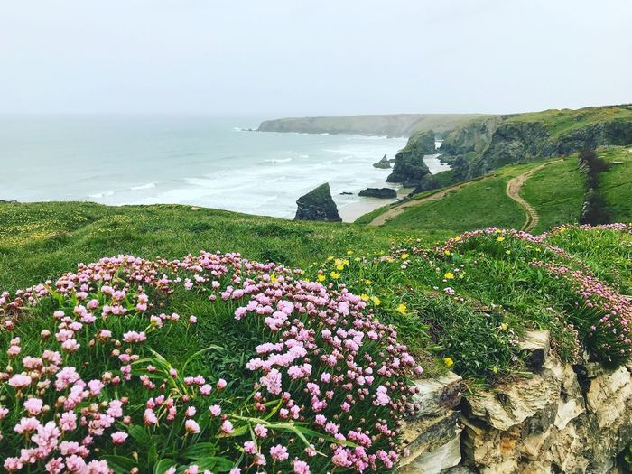 Coastal Path Cliffs And Sea National Trust Water Plant Sea Beauty In Nature Flowering Plant Flower Nature Scenics - Nature Tranquil Scene Horizon Over Water Green Color