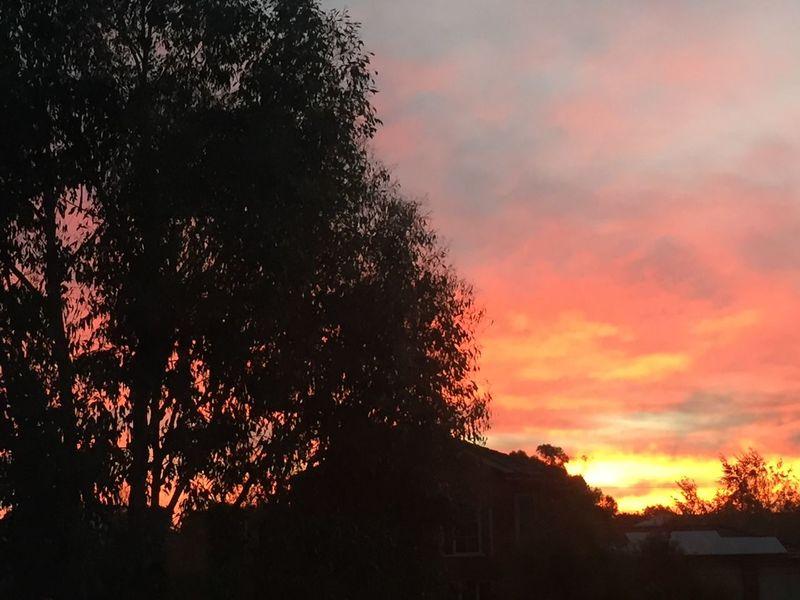 Gisborne sunset Sunset Silhouettes