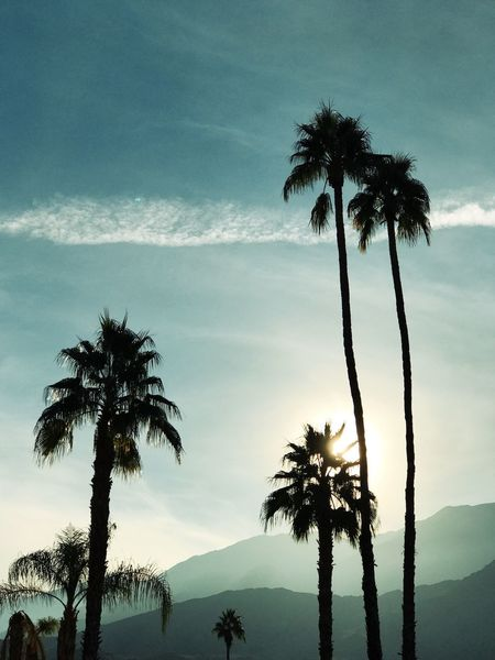 Palm Tree Tree Sky Tranquil Scene No People Palm Trees