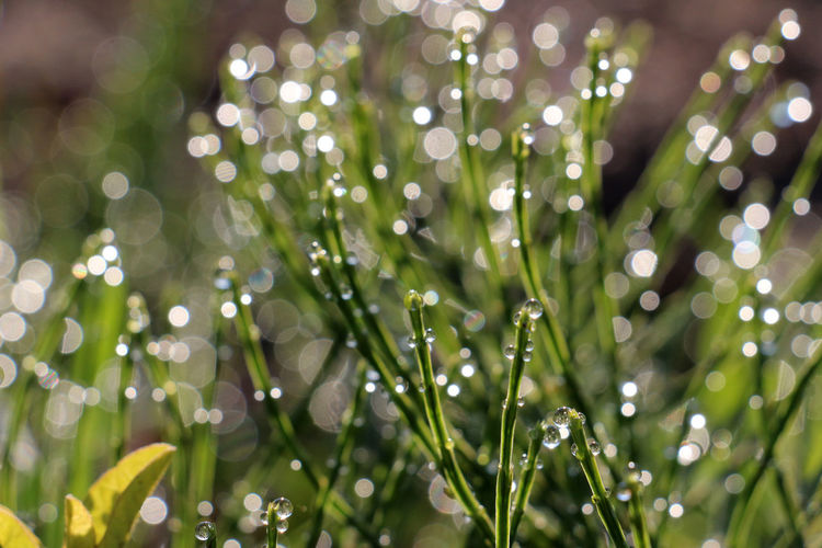 waterdrops on a grass Drops Of Water Freshness Grass Morning Sunny Watedrops