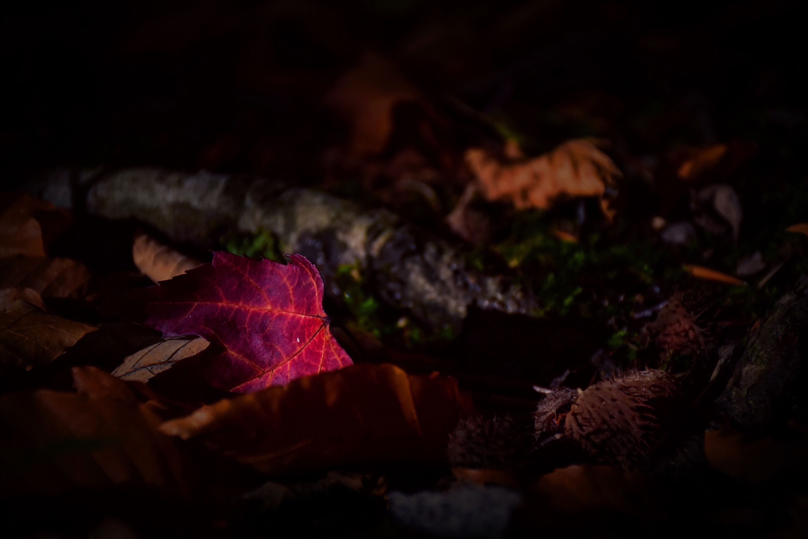 leaf, change, autumn, leaves, no people, nature, maple leaf, beauty in nature, night, close-up, backgrounds, fragility, outdoors