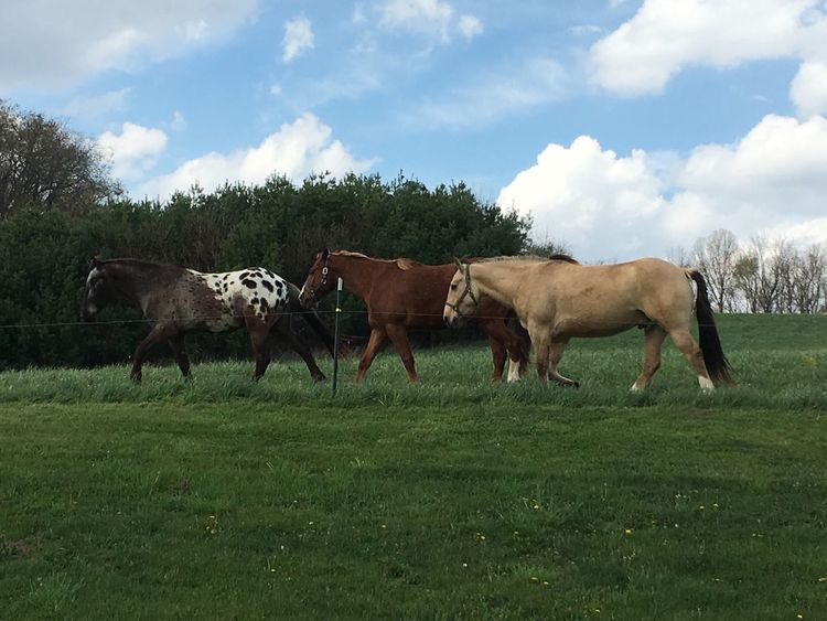 Horses walking My Favorite Place Animal Themes Horse Cloud - Sky Side View Sky Grass Grazing Field My Back Yard