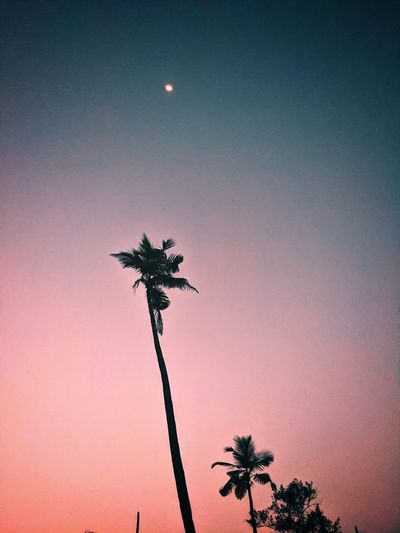 Low angle view of silhouette coconut palm tree against sky at dusk
