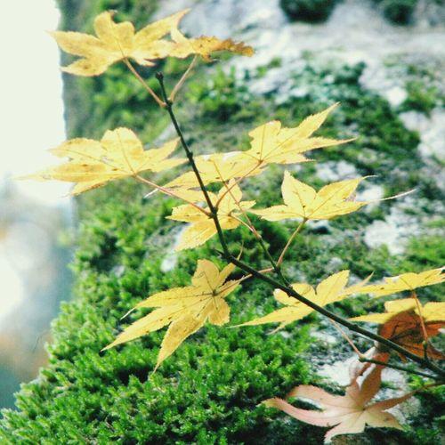 Nature 紅葉 EyeEm Nature Lover Green