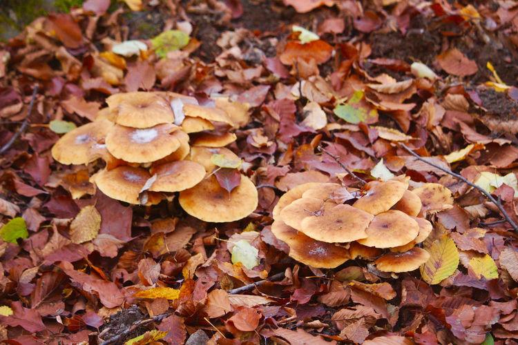 Full frame shot of mushrooms growing on field