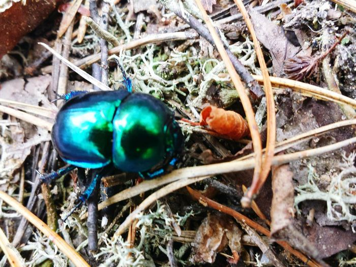 Bug Forestwalk Forest Life Forest