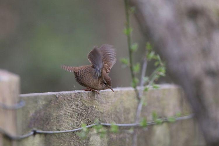 Close-up of a bird on wood
