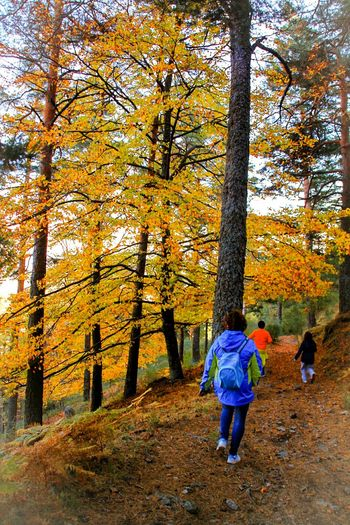 Rear View Real People Tree Leisure Activity Full Length Lifestyles Outdoors Day Women Beauty In Nature Nature Beech Beech Forest Monte Abantos Madrid El Escorial Hayedo Trekking Family Time Family Beechleaves Autumn EyeEm Gallery Check This Out Landscapes Finding New Frontiers