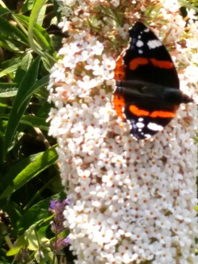 Nature On Your Doorstep Nature butterfly Taking Photos