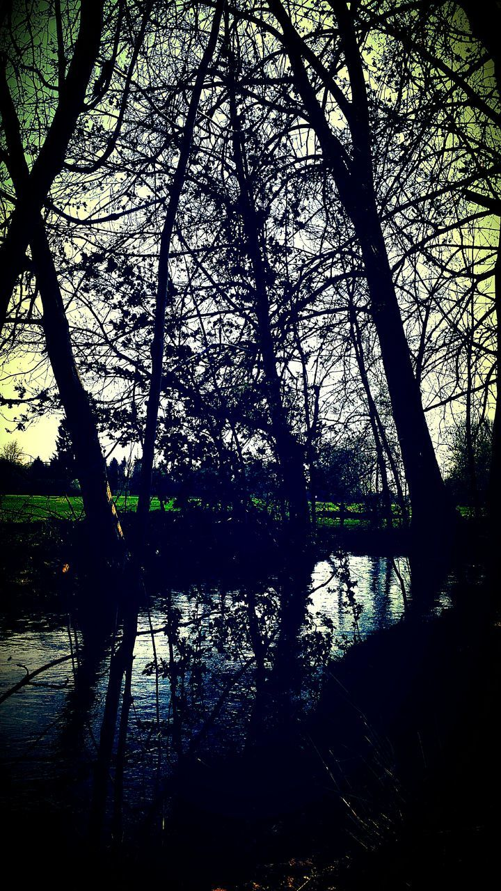tree, tranquility, nature, tranquil scene, reflection, lake, beauty in nature, scenics, water, outdoors, branch, tree trunk, silhouette, no people, forest, growth, landscape, day, grass, sky