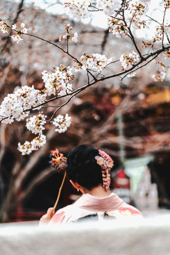 Rear view of person on cherry blossom