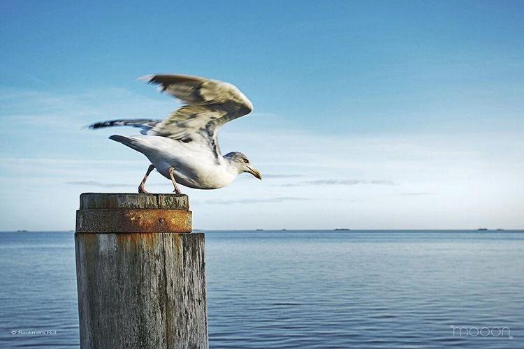 Fly Away Birds Insel Föhr Mooon - Was Reisen Ausmacht http://www.mooon.com/de/hotels/hotel-rackmers-hof