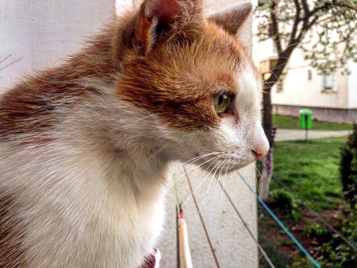 Purrfect Cat Georgous First Eyeem Photo EyeEmNewHere