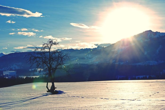 Winter landscape Winter Landscape Snow Tree Solitude Bavaria Alps Germany Mountains Sun Backlight Sky Blue Sky Beauty In Nature Cold Temperature Sunlight Sunbeam Nature Mountain