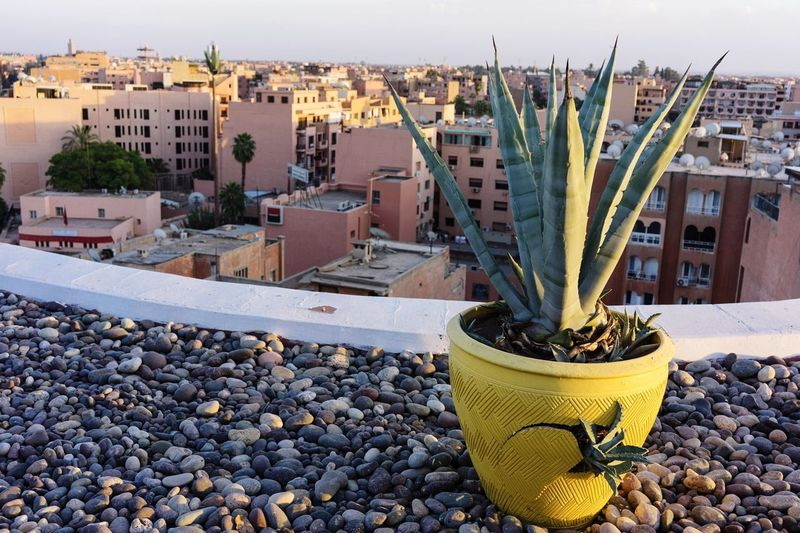 cactus rooftop city view Cactus Marakesh Marocco Travel Roof Rooftop Skyline Red City No People Day