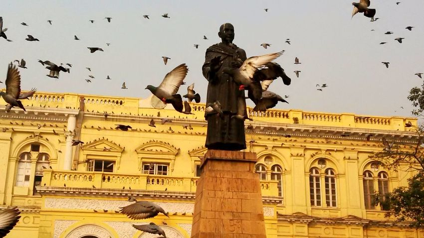 Pegions Chandnichowk Statue Architecture Delhi Vikki Beauty
