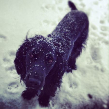 Peat<3 my little baby he loves the snow