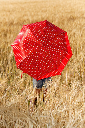 Girl in the cornfield. Cornfields Agriculture Cereal Plant Christmas Close-up Cornfield Crop  Day Emotion Field Gift Girl Portrait Grass Holiday Land Landscape Nature No People Outdoors Plant Red Rural Scene Single Object Umbrella