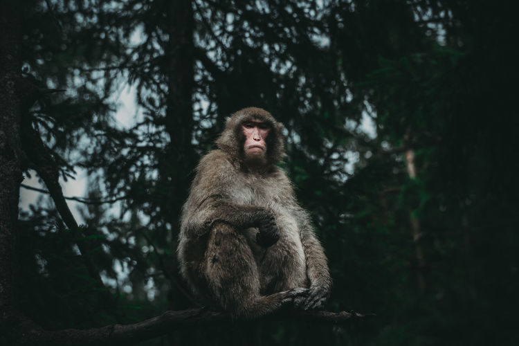 Monkey sitting on land in forest