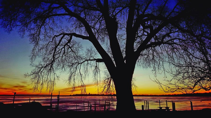 I invite you all to Madison Wisconsin 😎 EyeEm Selects EyeEmNewHere Wisconsin Winter Illuminate Madison Wisconsin Sunset Silhouette Tree Beauty In Nature Nature Scenics Sky