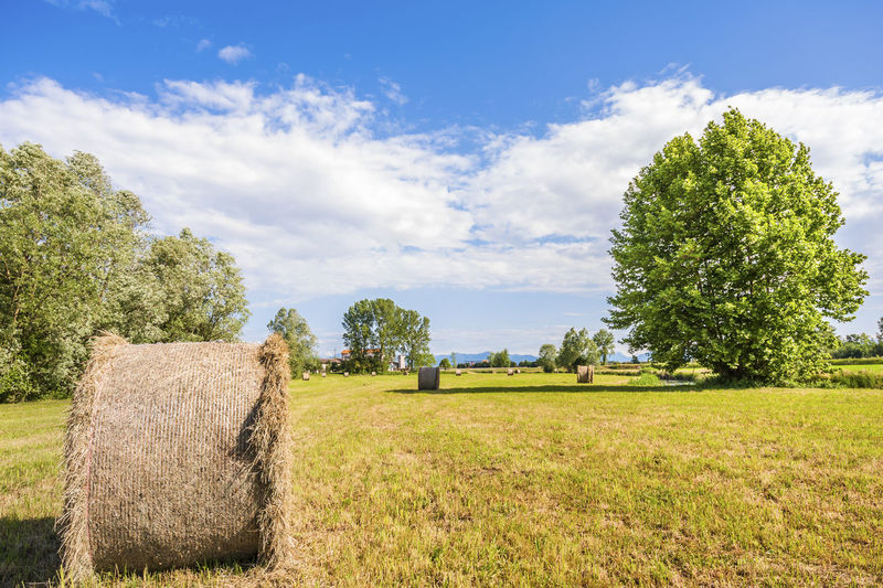 Bale of hay drying in the sun. Agricultural landscape Agriculture Bale  Day Field Field Grass Growth Harvest Hay Hay Bale Landscape Landscape_Collection Nature No People Outdoors Rural Scene Sky Straw Tree