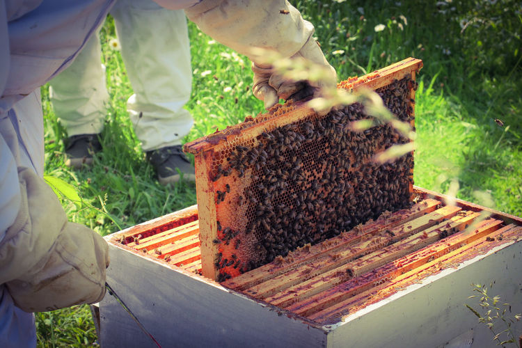 High angle view of people standing next to apiary