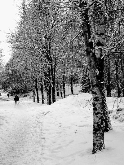 'Winter Wonderland' Nature