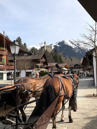 EyeEm Selects EyeEm Selects Horse Working Animal Built Structure Building Exterior Animal Themes Horse Cart Horsedrawn Transportation Domestic Animals Day Architecture Mode Of Transport Sky Outdoors Mammal No People Bolonie Style I❤️Gstaad Gstaad Tranquility Mountain Range Palace Freshness