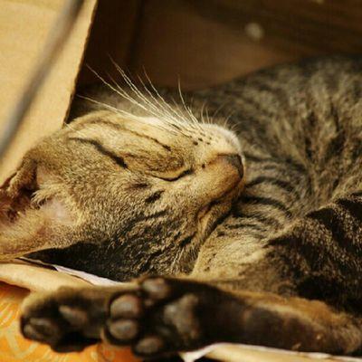 Sleep in the box Instagram InstaAsia INDONESIA Instamarinda samarinda pets kitten cat kucing