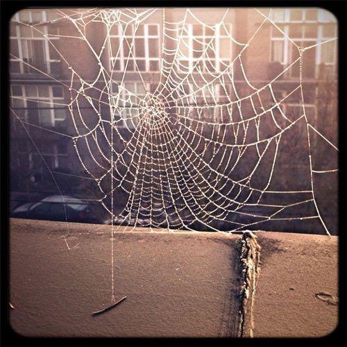 Winter Spiderwebs
